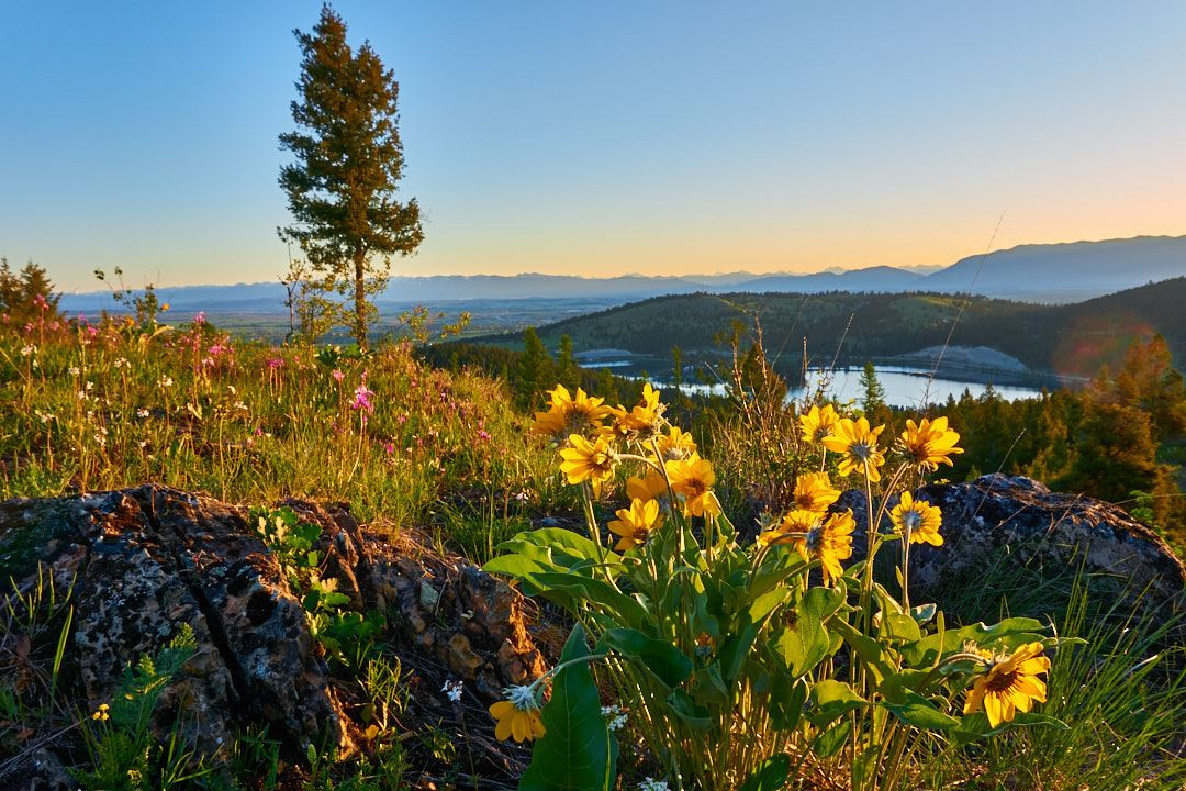 Yellow flowers on a hill overlooking a valley with a lake