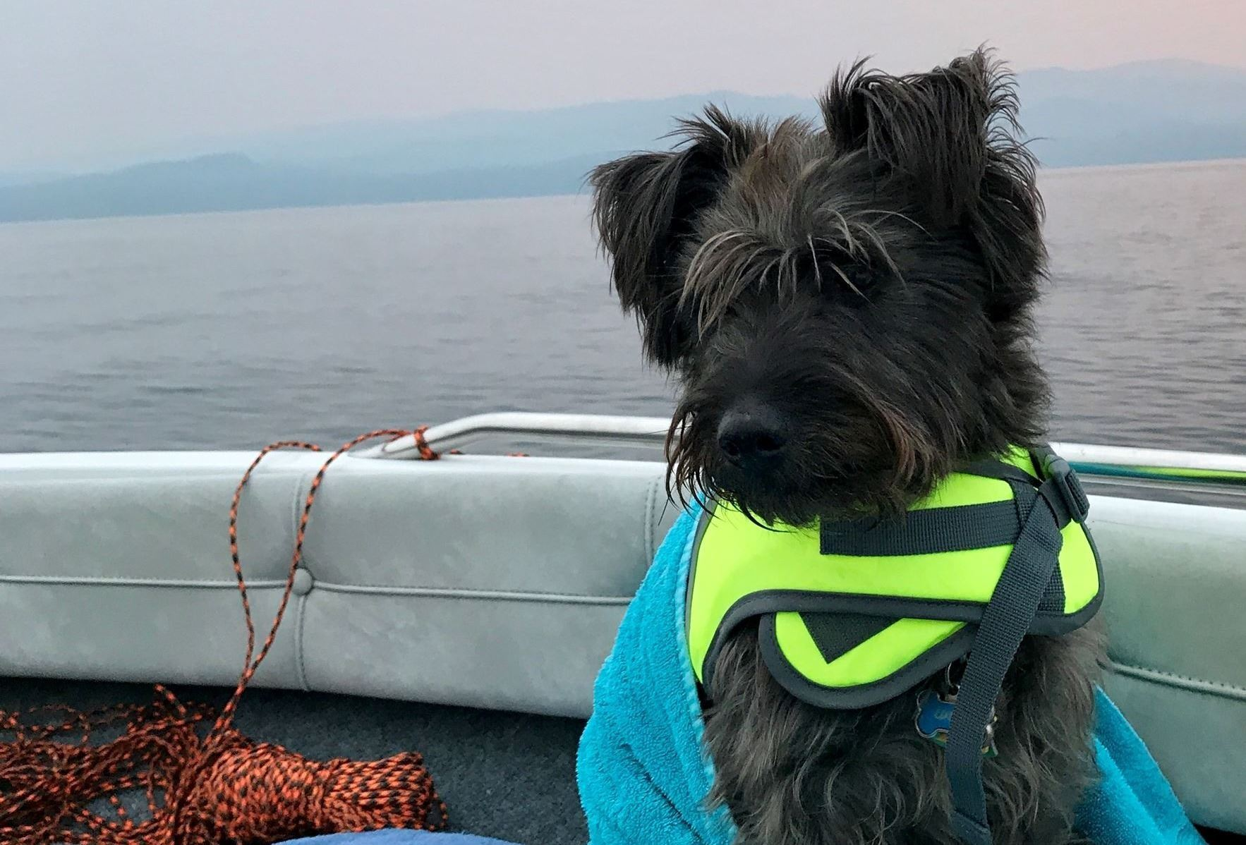 Dog on a boat on a lake