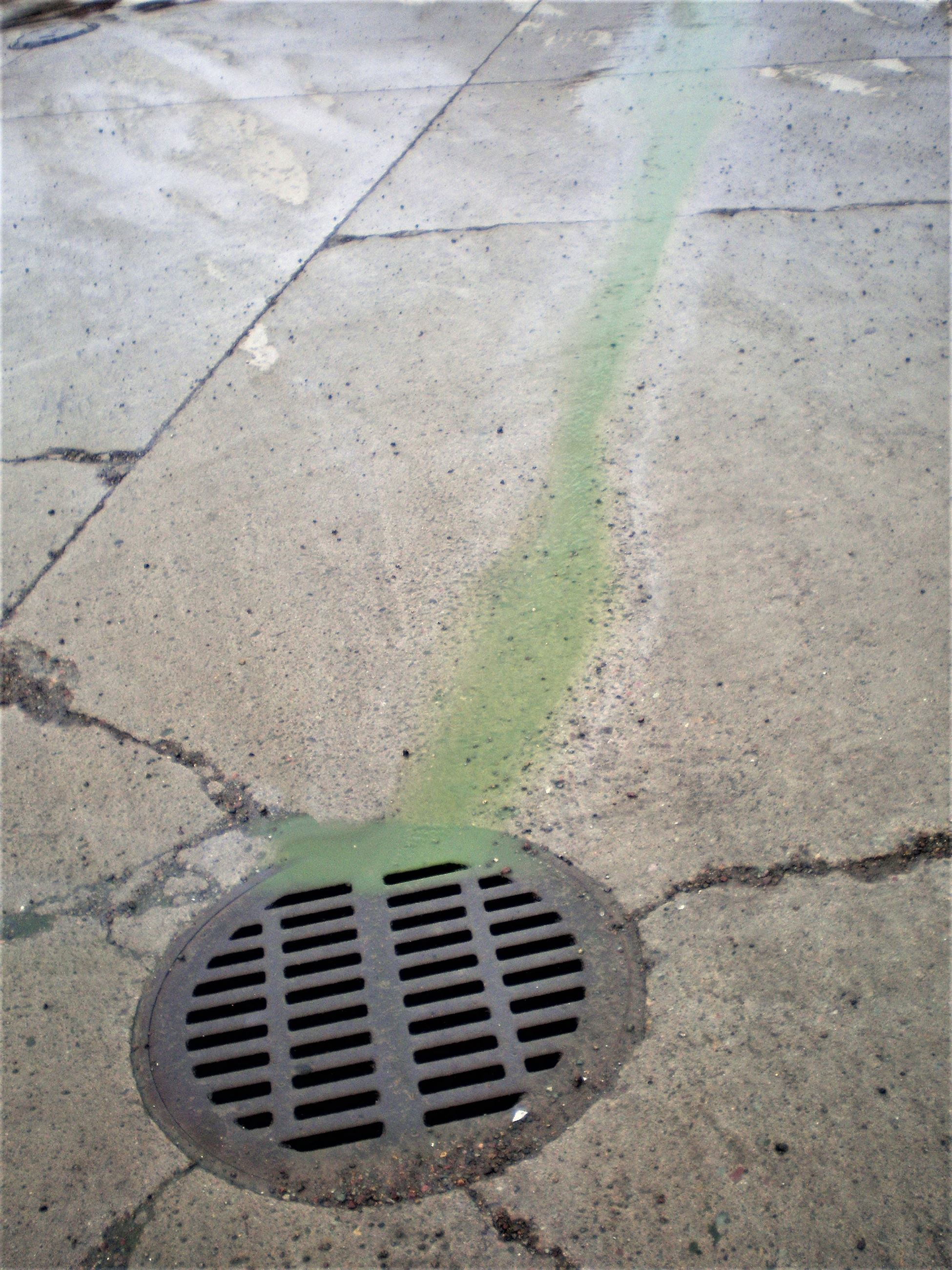 Green pollution running down storm drain