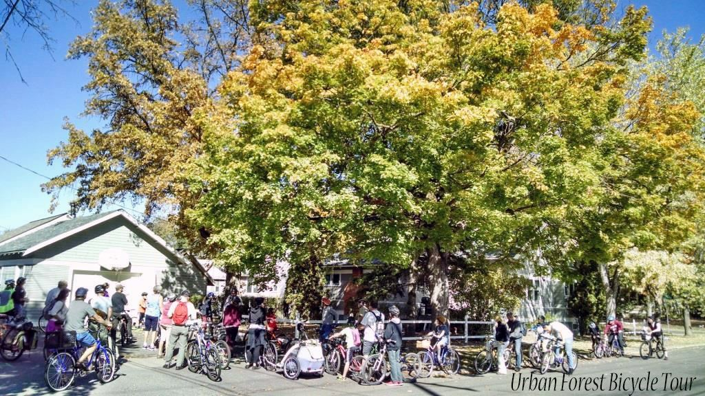 Urban Forest Bicycle tour